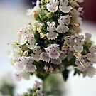 Catmint Flower by Hugh Fathers