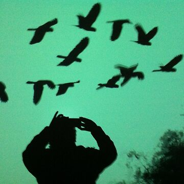 Birds by IPhone by sarenart