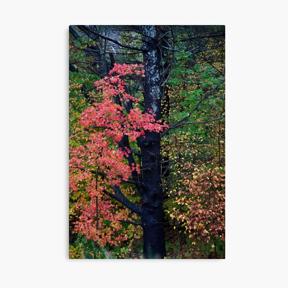 Beauty of Fall Canvas Print