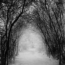 Dark Pathway by Samantha Higgs