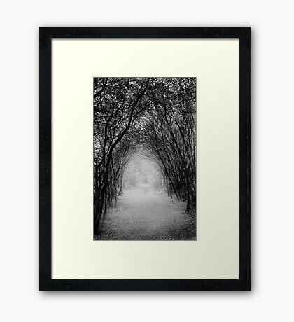 Dark Pathway Framed Print