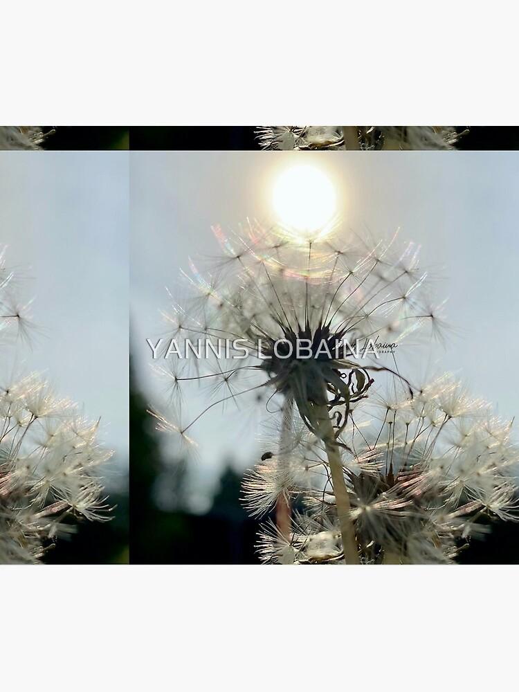 SUN DANDELION BY YANNIS LOBAINA by lobaina1979