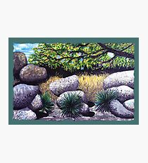 Tree and Boulders Photographic Print