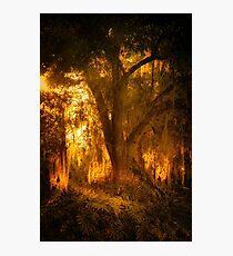 Gilded Oak Photographic Print