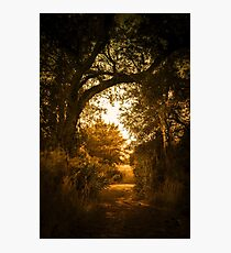 Golden Path Photographic Print
