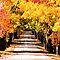 Beautiful Autumn Trees of the Midwest