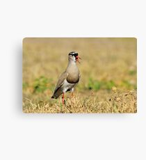 Plover Talk - Funny Nature and Entertaining Wildlife Canvas Print