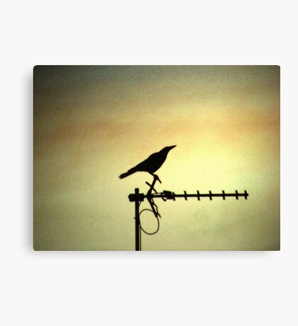 Awaiting Signal  Canvas Print