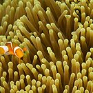 Nemo on Yellow by muzy