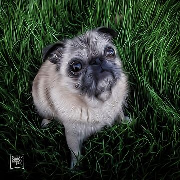 Pug in Grass by boodapug