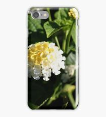Sundrops 2 iPhone Case/Skin