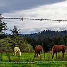 Out To Pasture by marilyn diaz
