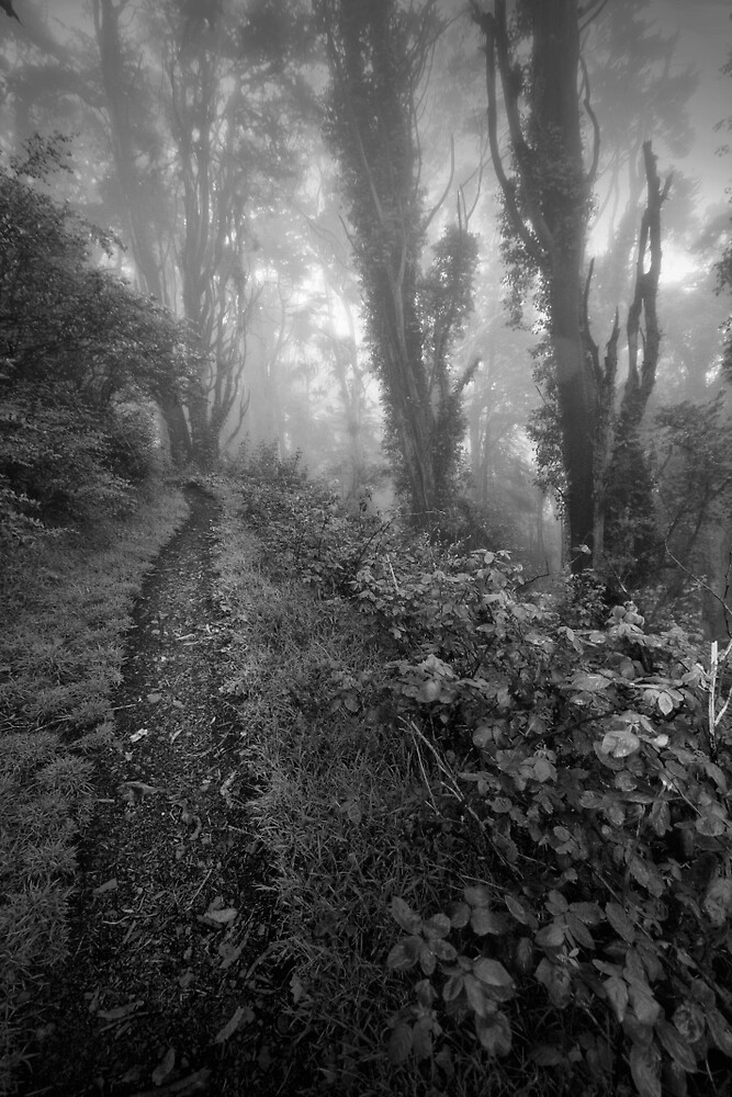 Passage Through the Woods by Richard Mason