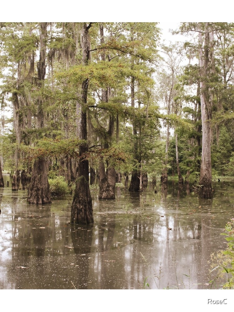 The Beauty Of The Swamp by RoseC