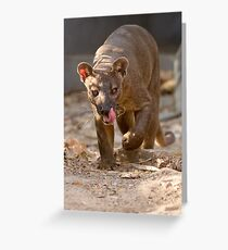 Prowling fosa Greeting Card