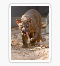 Prowling fosa Sticker