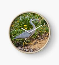 White Faced Heron  Clock