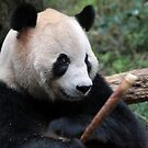 Panda Snack by BILL JOSEPH
