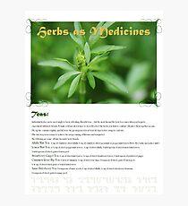 Herbal Calendar Teas- Cover Photographic Print