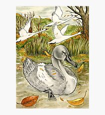 The Ugly Duckling's Lament Photographic Print