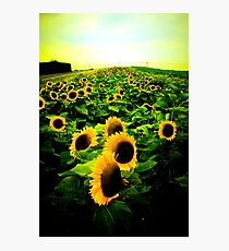 The Sunflower Photographic Print