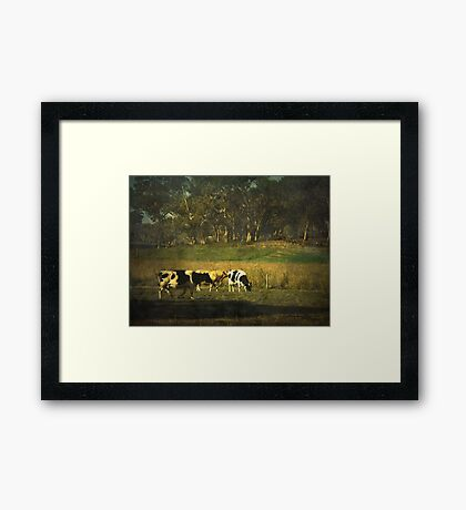 The bush, the cows, the gums ... Framed Print