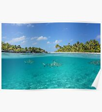 Half above and below island with sharks underwater Poster