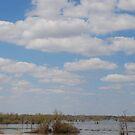 Henderson Swamp, Louisiana by Deborah Singer