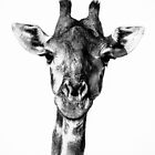 Giraffe by Beth Wold