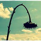 Summer's End by kibishipaul