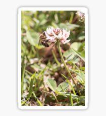 Thirsty Bee on Clover Flower Sticker