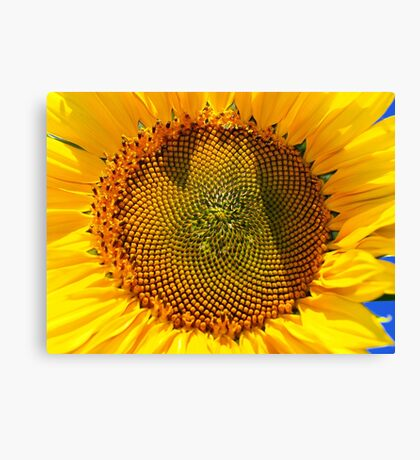 A Touch of Sun Canvas Print