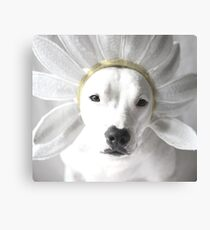 Pittie Flower Canvas Print