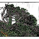 Twisted Tree (colour version) by wonder-webb