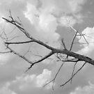 The Tree by ©Dawne M. Dunton