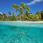 Over and under the sea tropical shore with sharks by Dam - www.seaphotoart.com