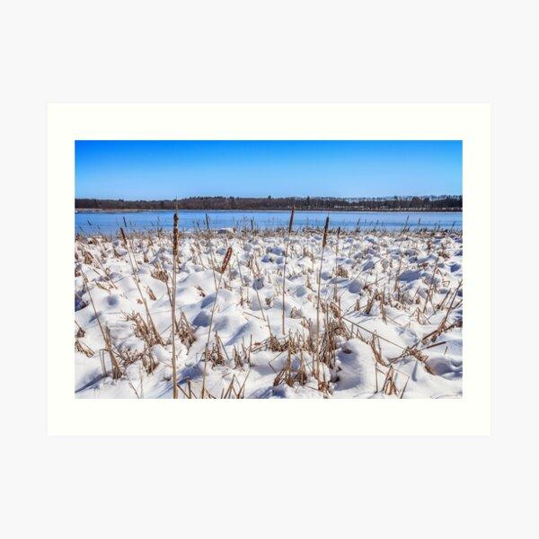 Cattail and Snowdrift Blues Art Print
