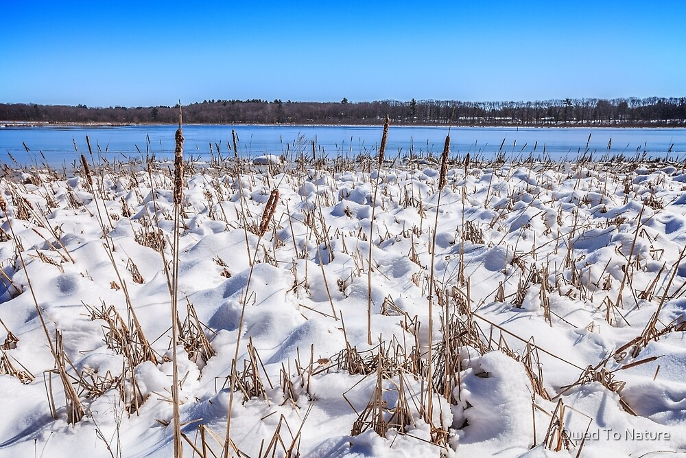 Cattail and Snowdrift Blues by Owed To Nature