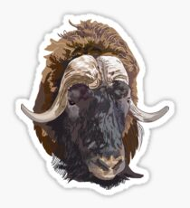 Hand drawn vector illustration of a musk ox s head Sticker