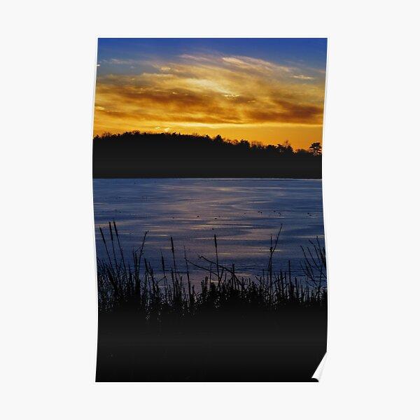 Winter cattail's golden view Poster