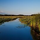 August flows through Great Meadows by Owed To Nature