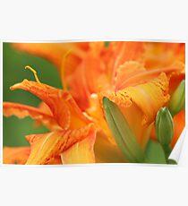 Red-Orange Flower Poster