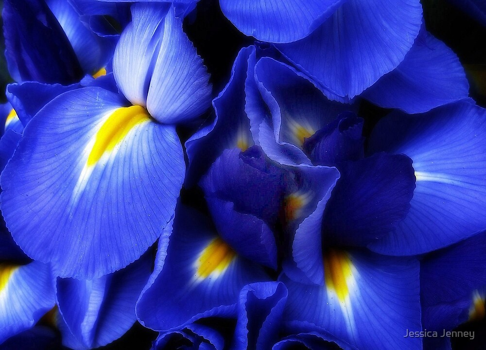 Iris Abstract by Jessica Jenney