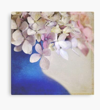 Pink and blue Hydrangeas Canvas Print
