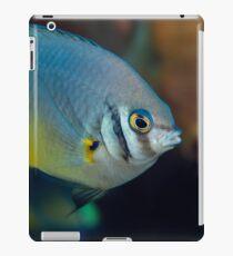 Golden tailed iPad Case/Skin