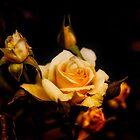 Open rose by Froggie