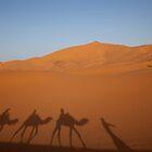 Sahara Desert, Morocco by docophoto