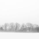 Veiled Tree Line by David Lamb