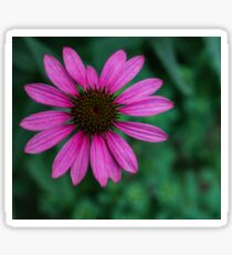 bright pink is beautiful! Sticker