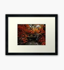 The Fall ~ Oregon Fall Colors ~ Framed Print